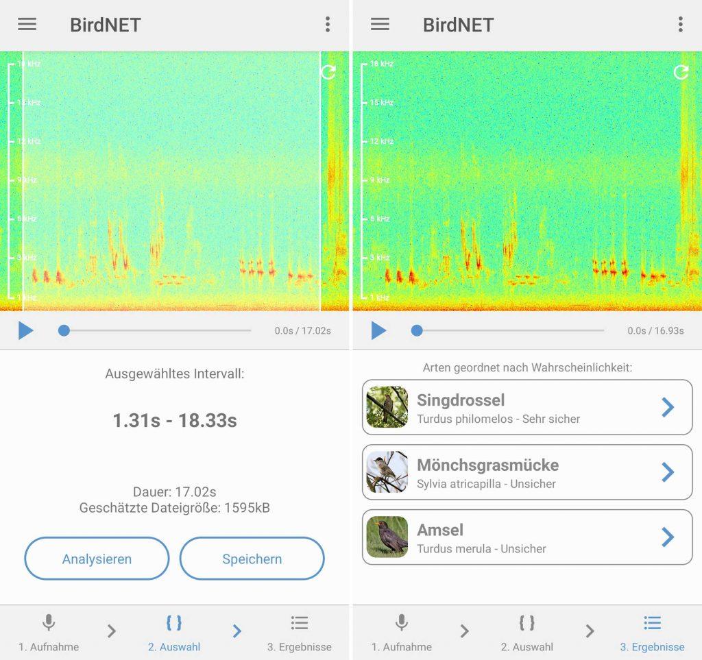 Android Birdnet Vogelstimmen