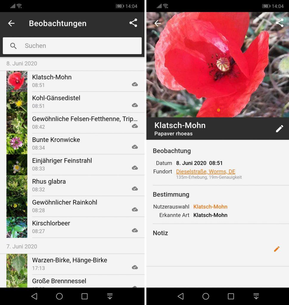 Android App Flora Incognita